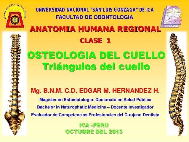 """UNIVERSIDAD NACIONAL """"SAN LUIS GONZAGA"""" DE ICA FACULTAD DE ODONTOLOGIA  ANATOMIA HUMANA REGIONAL CLASE 1  OSTEOLOGIA DEL C..."""