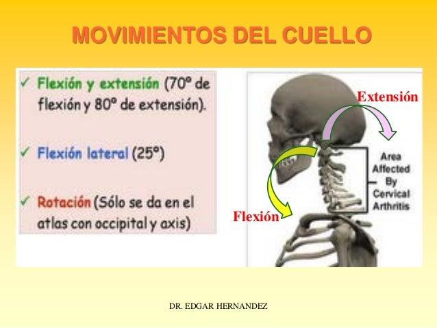 MOVIMIENTOS DEL CUELLO Extensión  Flexión  DR. EDGAR HERNANDEZ