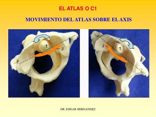 EL ATLAS O C1 MOVIMIENTO DEL ATLAS SOBRE EL AXIS  DR. EDGAR HERNANDEZ