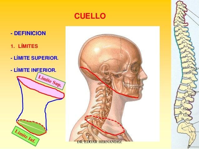 CUELLO - DEFINICION 1. LÍMITES - LÍMITE SUPERIOR. - LÍMITE INFERIOR.  DR. EDGAR HERNANDEZ