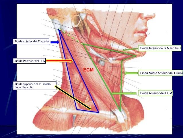 La osteocondrosis llevar tacones