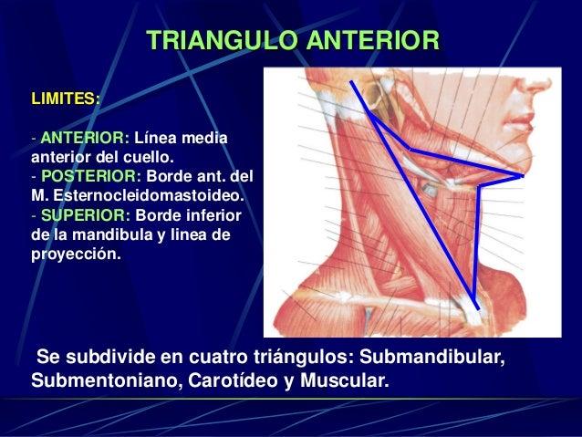 TRIANGULO ANTERIOR LIMITES: - ANTERIOR: Línea media anterior del cuello. - POSTERIOR: Borde ant. del M. Esternocleidomasto...