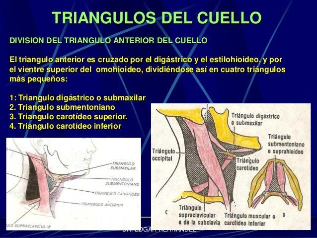 TRIANGULOS DEL CUELLO DIVISION DEL TRIANGULO ANTERIOR DEL CUELLO El triangulo anterior es cruzado por el digástrico y el e...