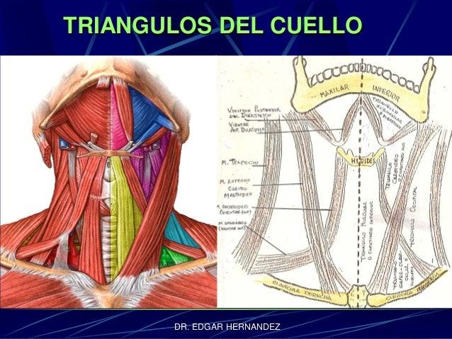 TRIANGULOS DEL CUELLO  DR. EDGAR HERNANDEZ