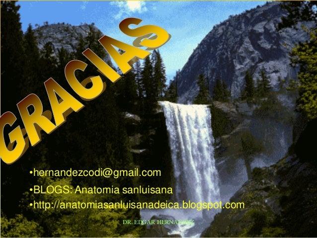 •hernandezcodi@gmail.com •BLOGS: Anatomia sanluisana •http://anatomiasanluisanadeica.blogspot.com DR. EDGAR HERNANDEZ