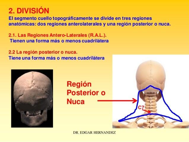 2. DIVISIÓN El segmento cuello topográficamente se divide en tres regiones anatómicas: dos regiones anterolaterales y una ...