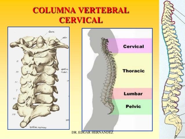 COLUMNA VERTEBRAL CERVICAL  DR. EDGAR HERNANDEZ