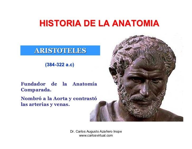 Excelente Fundador De La Anatomía Moderna Imagen - Anatomía de Las ...