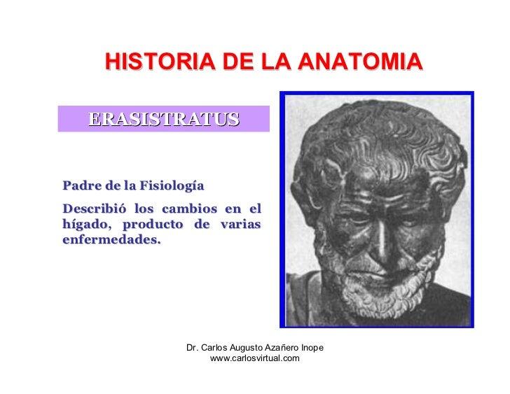 Vistoso Padre De La Anatomía Y La Fisiología Colección de Imágenes ...