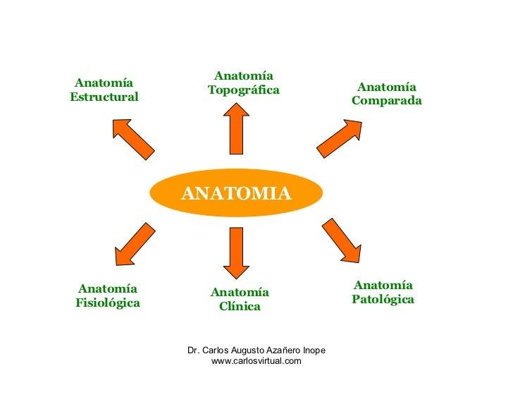 Único Anatomía Y Fisiología I En Línea Bosquejo - Anatomía y ...