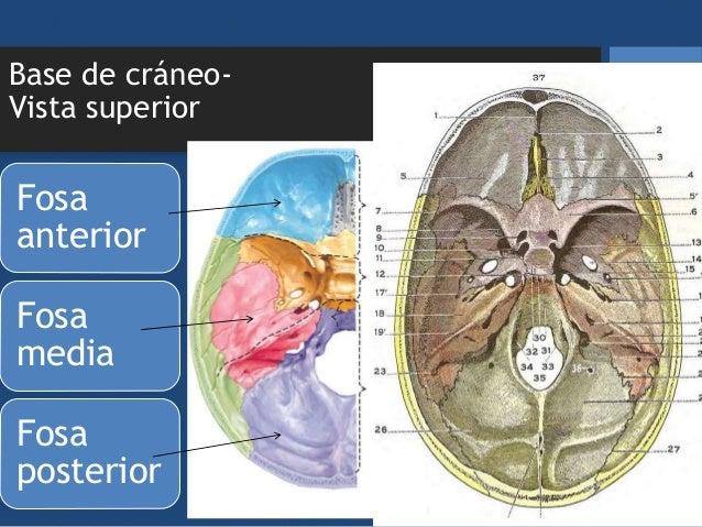 Clase 2. Anatomía del cráneo. Aux de Enfermería 4