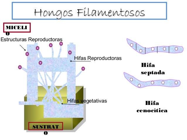 Clase1 Micologia1