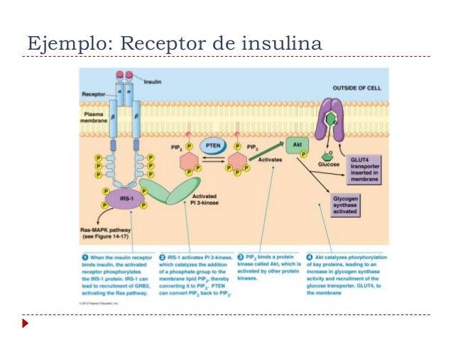 Clase 1 principios de fisiología endocrina 2014