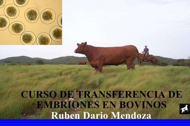 CURSO DE TRANSFERENCIA DE EMBRIONES EN BOVINOS Ruben Dario Mendoza
