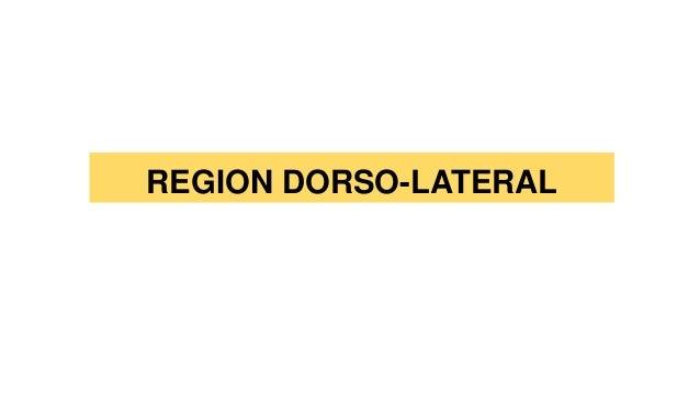 REGION DORSO-LATERAL