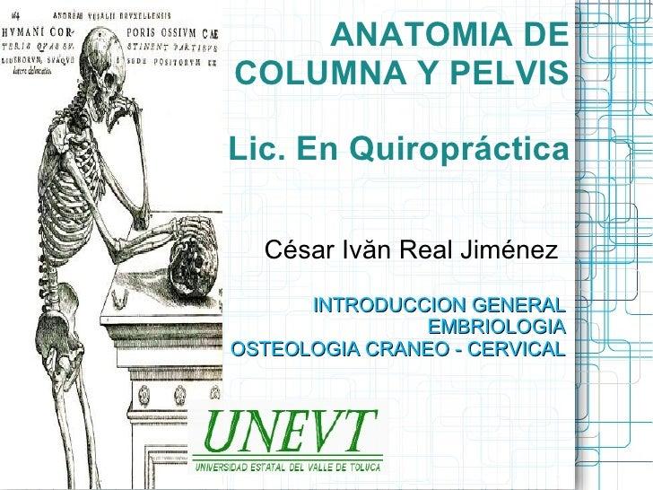 ANATOMIA DECOLUMNA Y PELVISLic. En Quiropráctica  César Ivăn Real Jiménez      INTRODUCCION GENERAL                EMBRIOL...