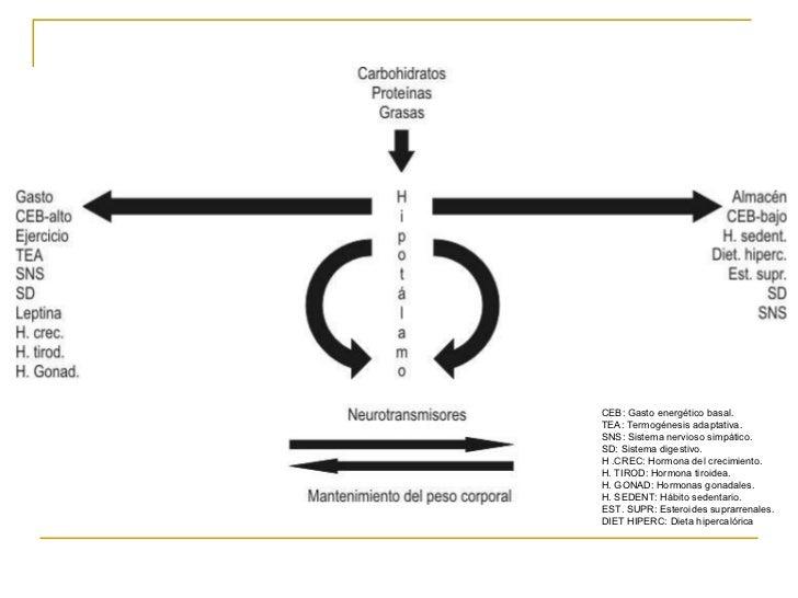 Clase2 2011 nutricion