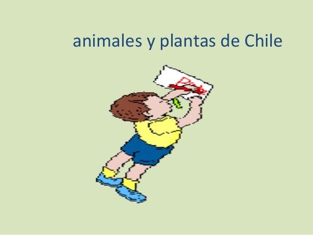 animales y plantas de Chile