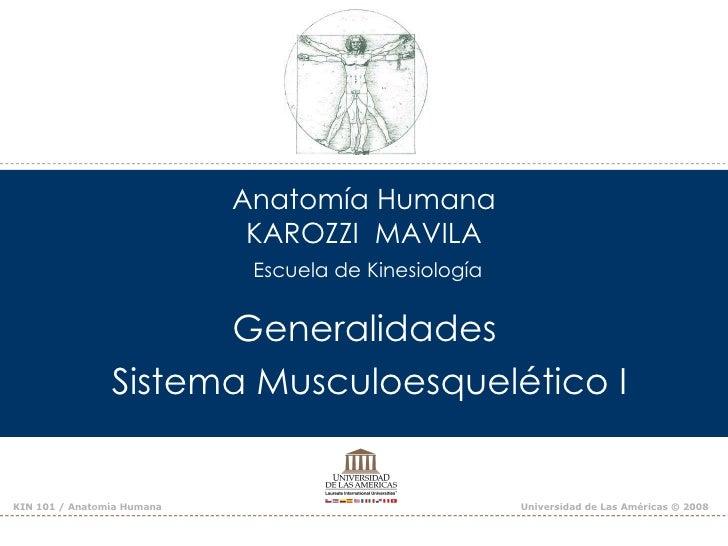 Anatomía Humana                             KAROZZI MAVILA                             Escuela de Kinesiología            ...