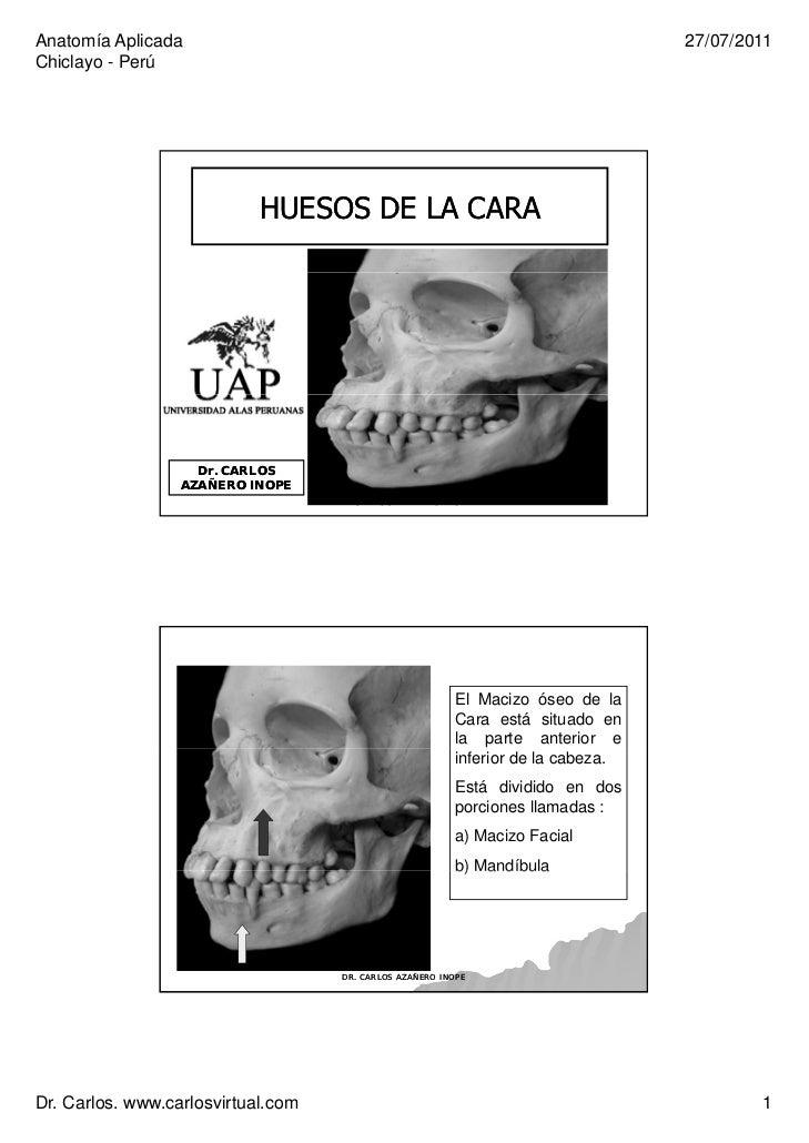 Clase 2 huesos de cara