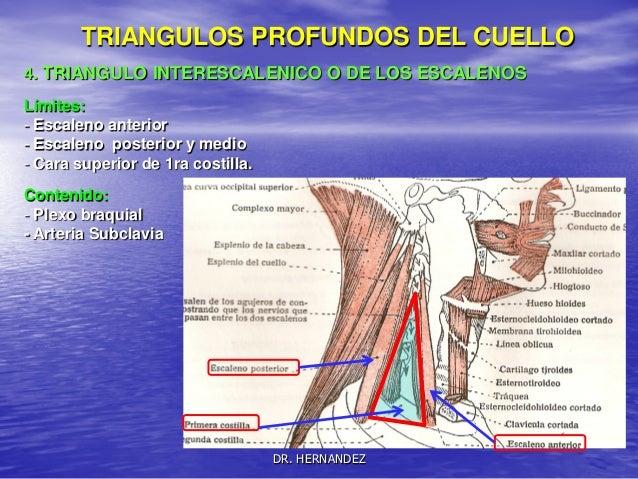 Clase2miologiacuello resumenpdf-131109212621-phpapp02
