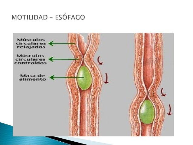 Clase 3.1 motilidad esofago