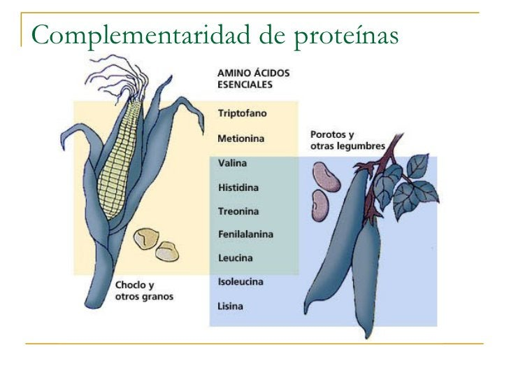 Complementaridad de proteínas