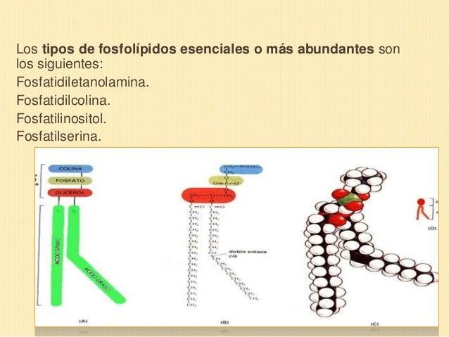 Clase 3 Biologia Bi Estructura De La Membrana Celular