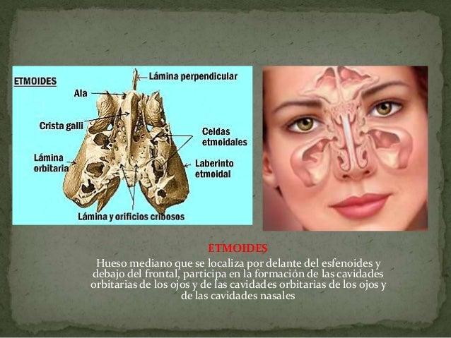Clase 4 for Paredes orbitarias