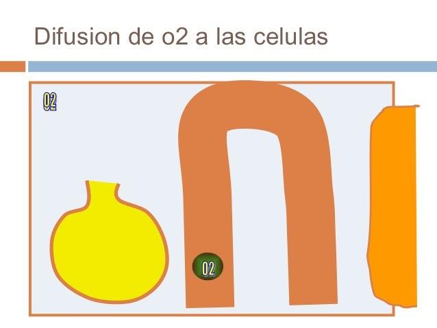 Difusion de o2 a las celulas