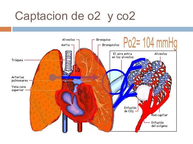 Captacion de o2 y co2