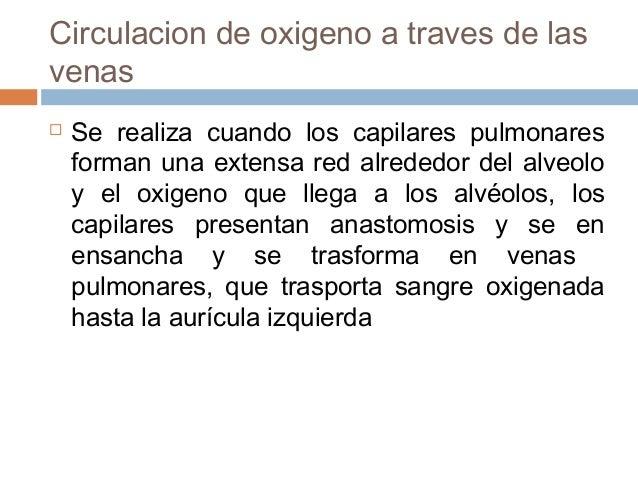 Circulacion de oxigeno a traves de lasvenas Se realiza cuando los capilares pulmonaresforman una extensa red alrededor de...