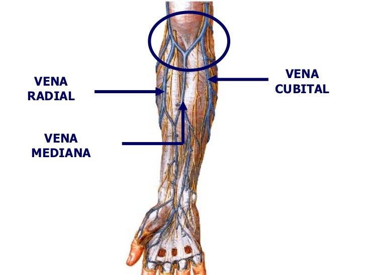 Clase N°4 Anatomia Humana - Tema: Brazo y Codo