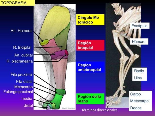 Clase 4 anatomía.