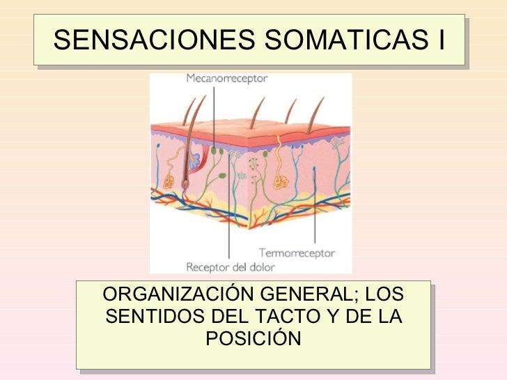 Clase 5 - Sensaciones Somáticas I