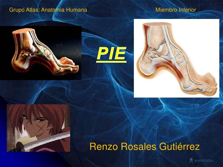Grupo Atlas: Anatomia Humana<br />Miembro Inferior<br />PIE<br />Renzo Rosales Gutiérrez<br />