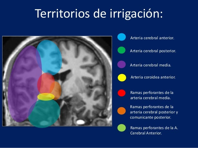 Irrigacion de la arteria cerebral media pdf