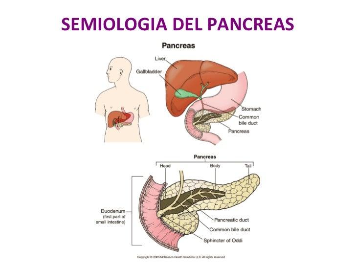 Sintomas Del Pancreas Related Keywords - Sintomas Del