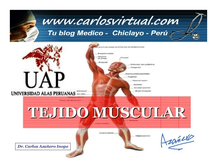 TEJIDO MUSCULAR  Dr. Carlos Azañero Inope   Dr. Carlos Augusto Azañero Inope                                  www.carlosvi...
