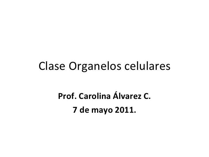 Clase Organelos celulares Prof. Carolina Álvarez C. 7 de mayo 2011.