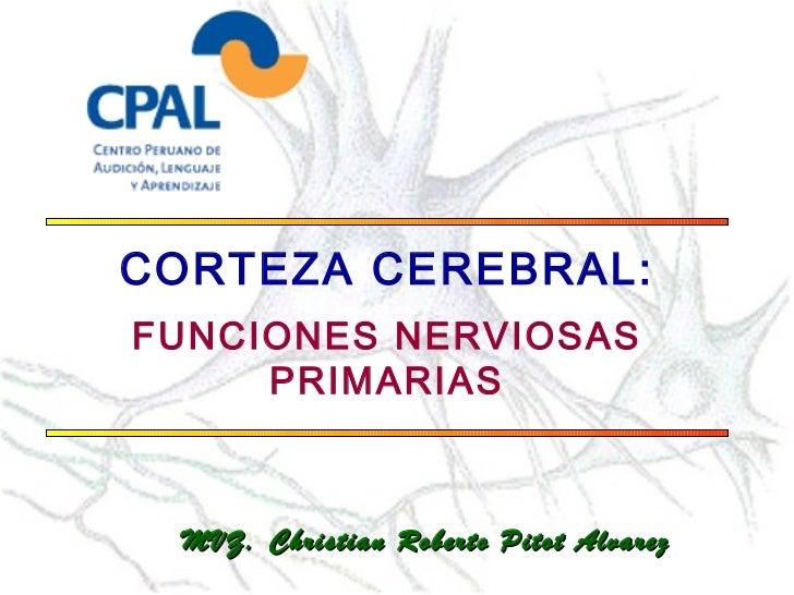 CORTEZA CEREBRAL:FUNCIONES NERVIOSAS     PRIMARIAS MVZ. Christian Roberto Pitot Alvarez