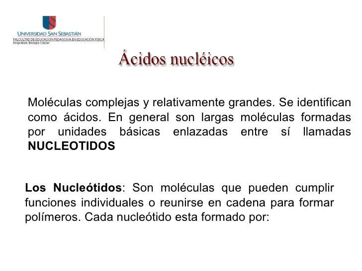 Moléculas complejas y relativamente grandes. Se identifican como ácidos. En general son largas moléculas formadas por unid...