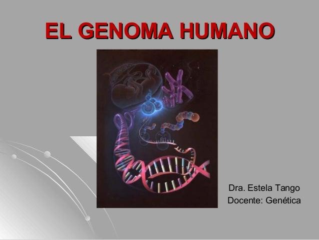 EL GENOMA HUMANOEL GENOMA HUMANODra. Estela TangoDocente: Genética