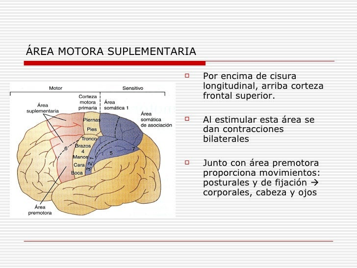 AREA MOTORA SUPLEMENTARIA EBOOK DOWNLOAD