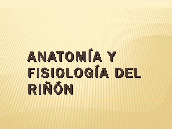 Clase No. 8::. Anatomía y Fisiología del Riñón