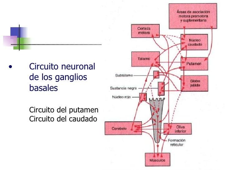 Circuito Neuronal : Clase