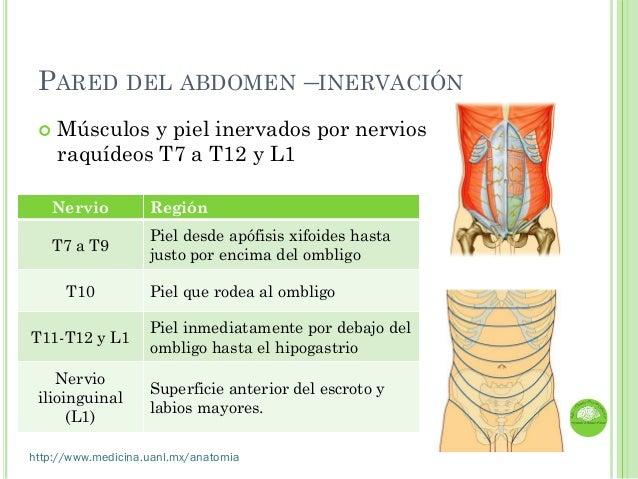 Clase Anatomia de Abdomen