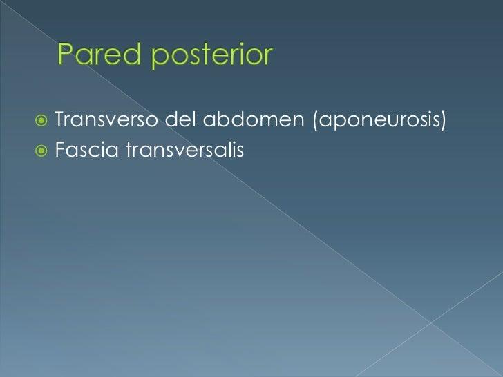 Pared posterior<br />Transverso del abdomen (aponeurosis)<br />Fascia transversalis<br />