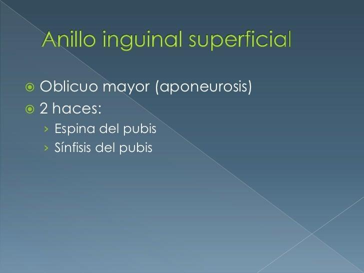 Anillo inguinal superficial<br />Oblicuo mayor (aponeurosis)<br />2 haces:<br />Espina del pubis<br />Sínfisis del pubis<b...