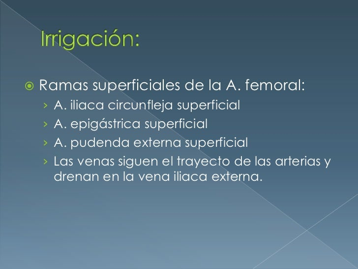 Irrigación:<br />Ramas superficiales de la A. femoral:<br />A. iliaca circunfleja superficial<br />A. epigástrica superfic...